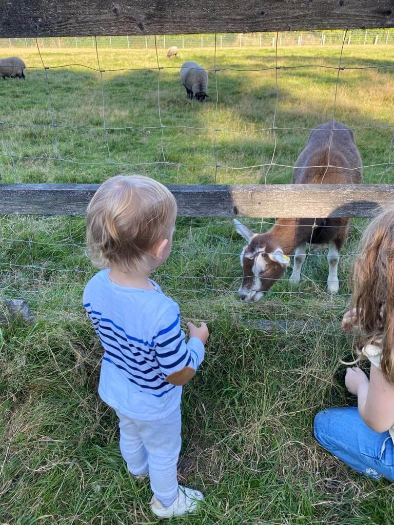 Bauernhof - Lockdownbeschäftigung für Kinder